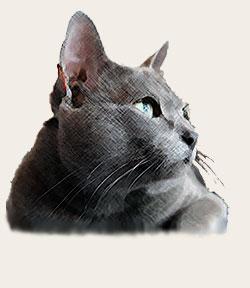 korat katt pris